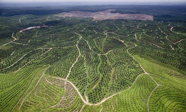 A palm oil plantation, in Riau province, Indonesia. Six million hectares of primary forest was lost in Indonesia between 2000 and 2012.