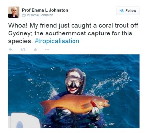 A Twitter image posted by Professor Emma L Johnston showing her friend catching a coral trout off Sydney. Photo: Twitter @DrEmmaLJohnston