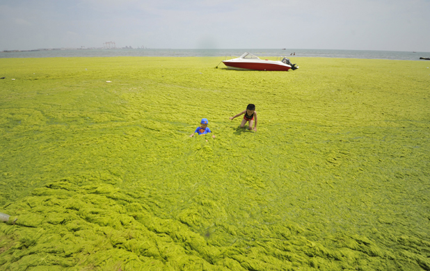China algal bloom