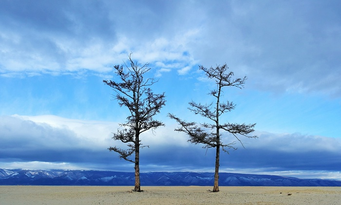 """Two trees struck me on a desolate strip of sand on Olkhon Island (Russia). This area was peaceful and beautiful, but the weather was icy and snow spotted the ground. Behind me was a wood with trees crumbling in the bitter winter, but these two were thriving in isolation."" Olkhon Island sits on Lake Baikal, which the Russian government says is disappearing due to drought."