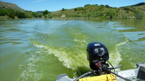 Lake Tutira in northern Hawke's Bay is too toxic for swimming, boating and kayaking.