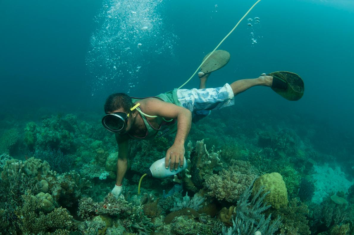 A fisherman illegally applies cyanide to a coral reef crevice off the island of Palawan, in the Philippines. Photograph by Jurgen Freund, Nature Picture Library, Corbis