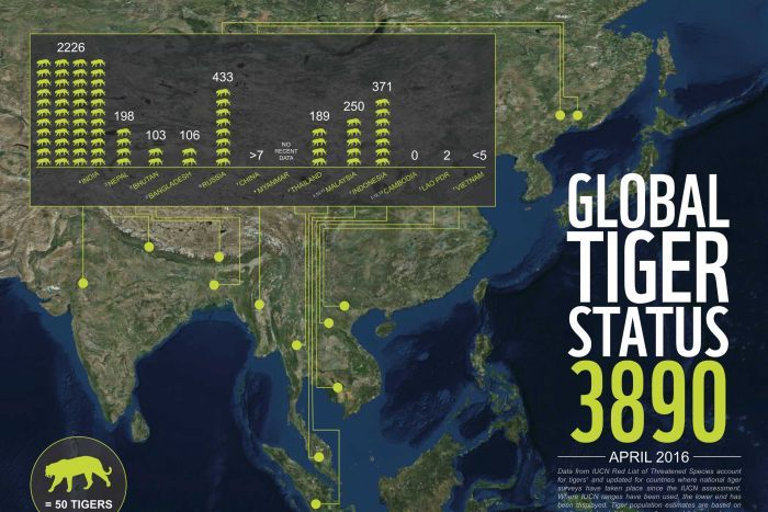 This infographic shows the number of wild tigers living in 13 different countries across Asia. (Supplied: WWF)