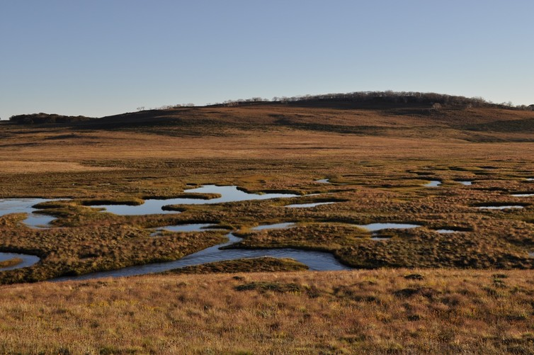 Alpine wetland, rich in Sphagnum and other peat-forming plants, Bogong High Plains, Alpine National Park, Victoria. Photo: James Camac