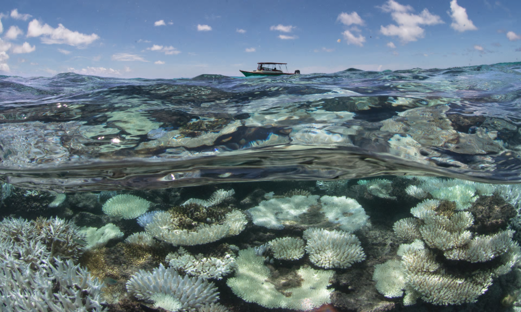 Coral bleaching in the Maldives, captured by the XL Catlin Seaview Survey. Richard Vevers of the Ocean Agency says the damage is 'truly haunting'.