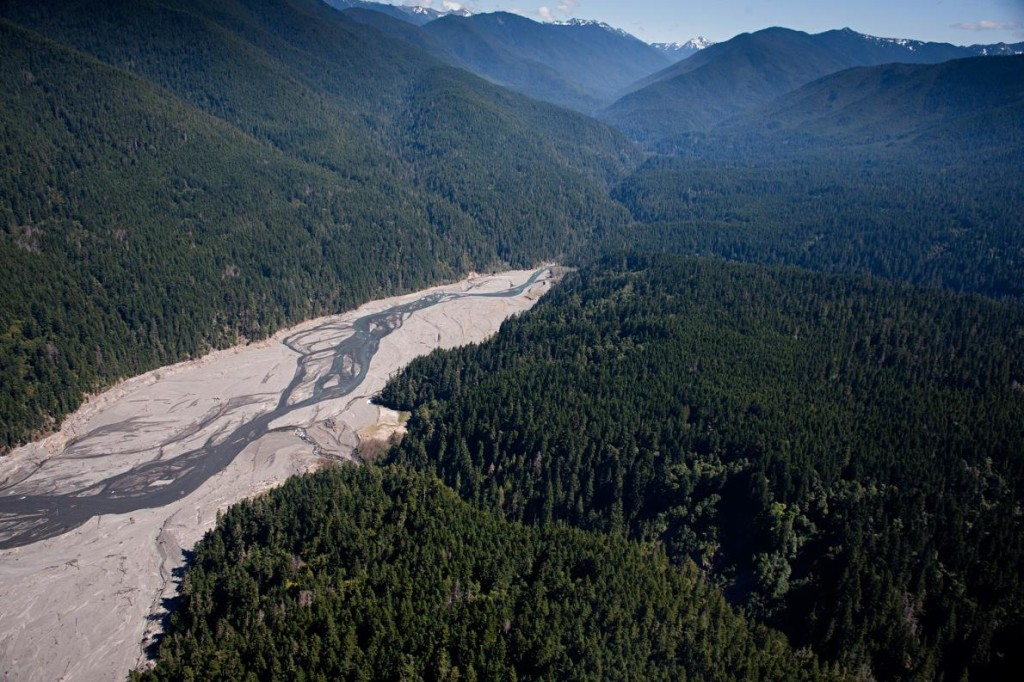 The freshly freed Elwha River meanders through a former lakebed. Photograph by JASON JAACKS, National Geographic Creative