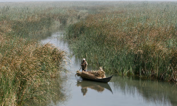 A marsh Arab man paddles a boat loaded with reeds at the Chebayesh marsh in Nassiriya, Iraq. Photograph: Saad Shalash/Reuters