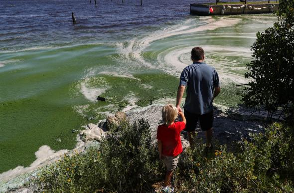 Robert Barstow shows his son the algae hugging the shoreline of the St. Lucie River on July 11 in Stuart, Florida. Photograph by Joe Raedle, Getty
