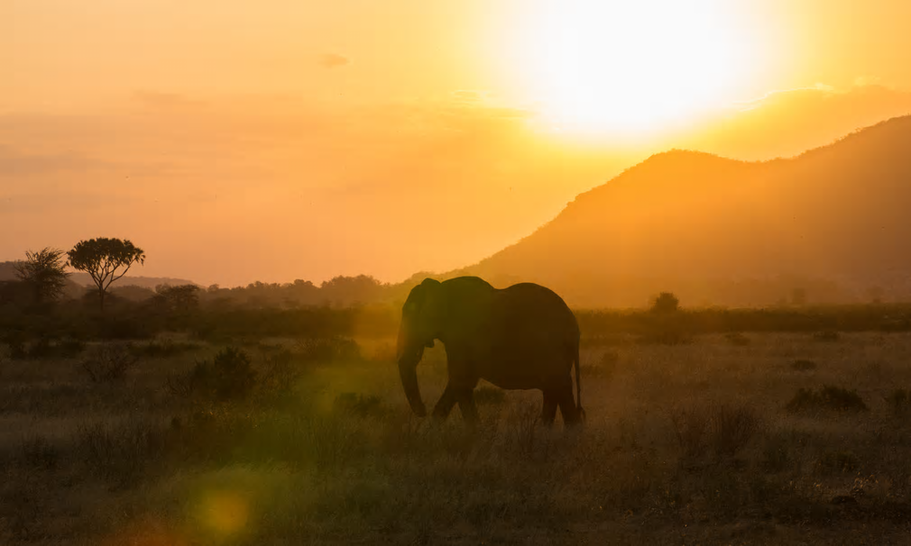 In Kenya, public opposition to poaching has grown, and there has been increasing cooperation between conservationists and local communities – which is vital to elephants' survival.