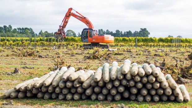 Vineyard posts being removed to make way for a housing development.  Photo: Ricky Wilson/Fairfax NZ