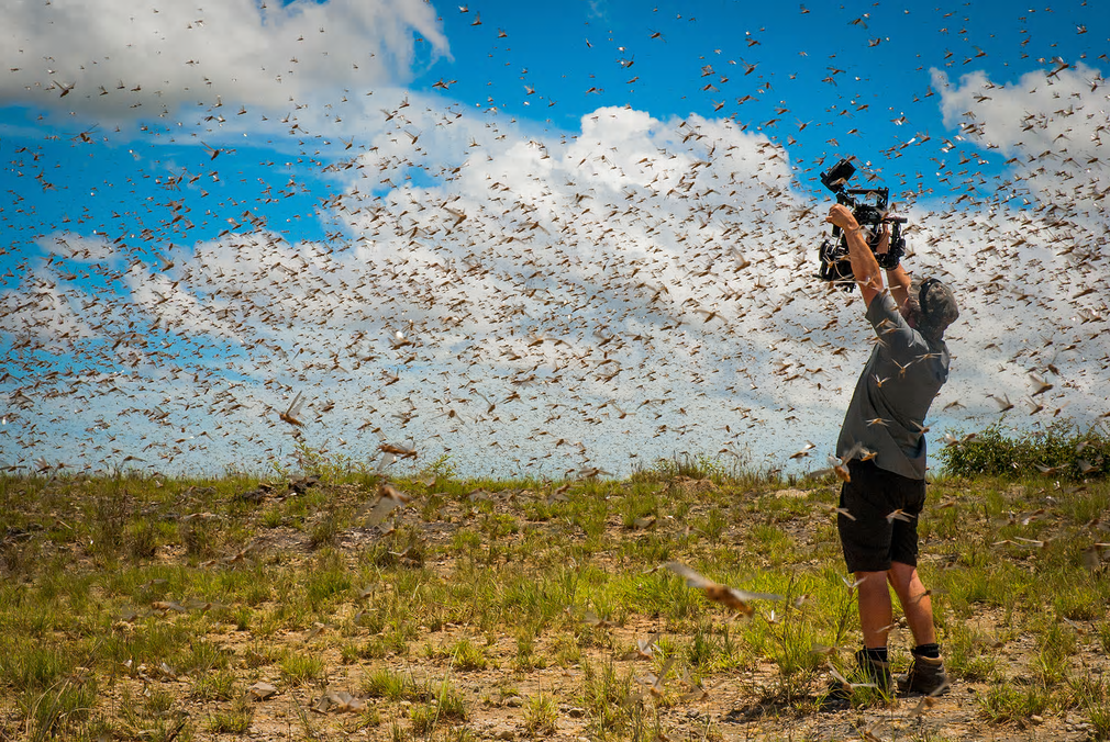 The idea of being in the middle of a swarm of a billion flying locusts might bring most people out in a cold sweat, but not cameraman Rob Drewett. He and the team were able to put themselves in the flight path of this super-swarm in south-west Madagascar. Rob was then able to use the latest in hand-held, gyro-stabilised camera technology to get shots that flew alongside the locusts, as if part of the swarm.  Photograph: Ed Charles/BBC NHU