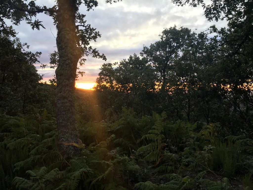 Sunrise through the bush walking up a mountain to Foncebadon.