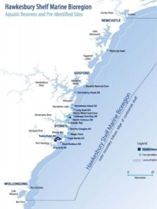 Photo: Conservationists want the Hawkesbury Shelf marine bioregion, which stretches from Newcastle to Wollongong, to be earmarked as a marine park. (Supplied: NSW Marine Estate Management Authority)