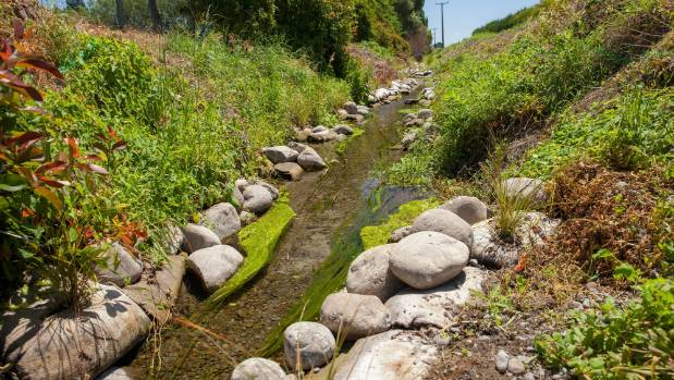 Carex secta has been planted to create shade, sandbags filled with river gravel stabilise the bank and rocks, stones and logs vary the flow and create a variety of habitats.