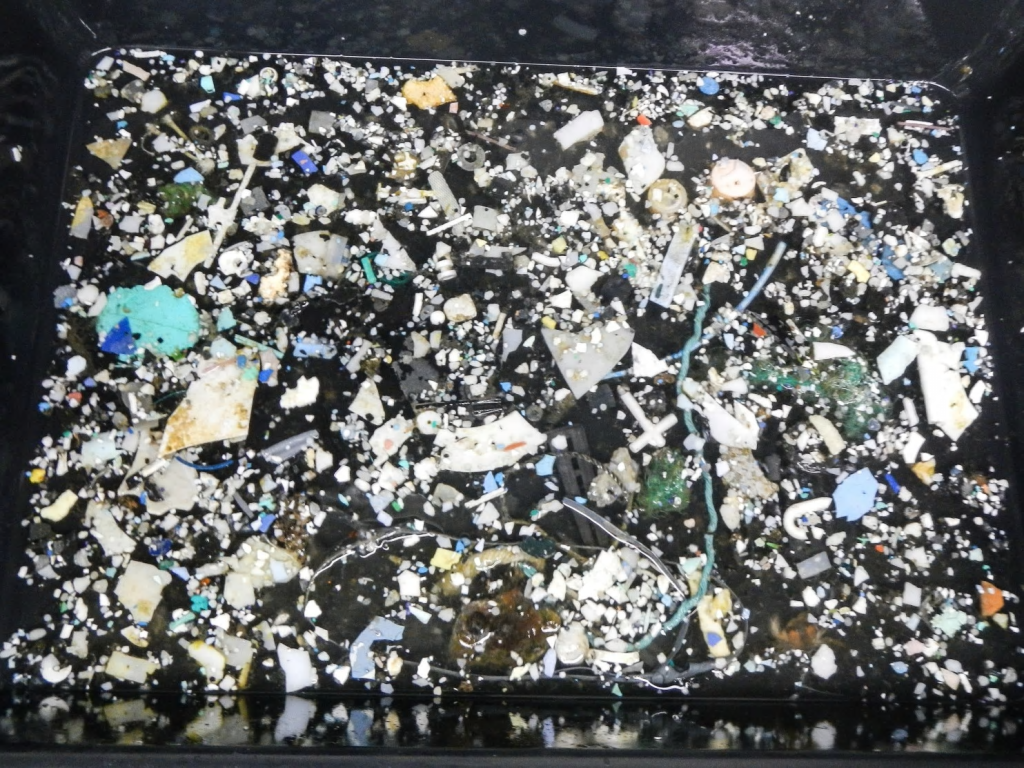 A sampling of plastic from the Great Pacific Garbage Patch. (The Ocean Cleanup.)