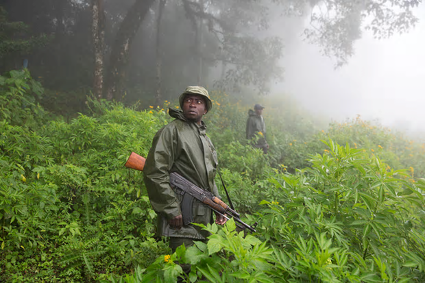 Virunga rangers are recruited from villages surrounding the park. Photograph: James Oatway for the Guardian