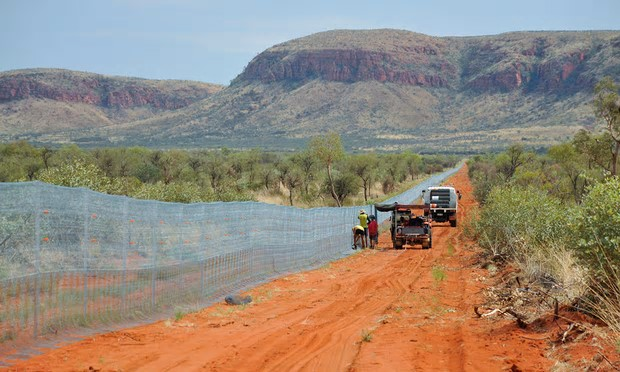 Construction is underway on the 44km fence. Photograph: Wayne Lawler/Australian Wildlife Conservancy