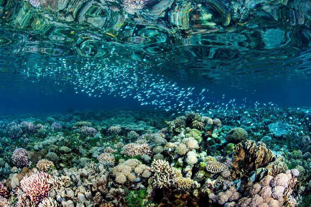 Stunning coral reefs follow the coast of Timor-Leste. In 2016, a study revealed that its coral reefs were some of the healthiest and most diverse in the world. The survey results had found an average of 253 reef fish species at each site, surpassing a previous record in Raja Ampat, the marine epicentre of biodiversity.  Photograph: Paul Hilton/Conservation International