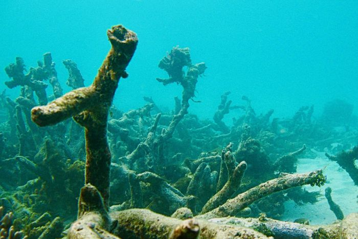 Reefs around Lizard Island are quieter since being hit by two cyclones and severe bleaching. (Supplied: PNAS)