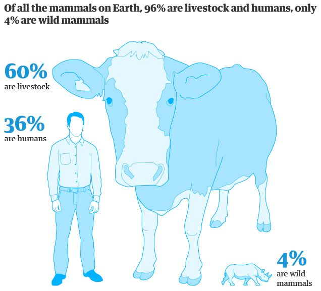 Proportion of mammals on earth: 60% livestock, 36% humans, 4% wild animals