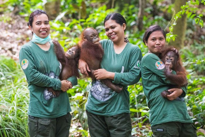 Photo: The youngest orangutans learn from their human surrogate mothers at the school. (Supplied: Four Paws/James Mepham)