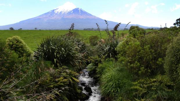 An independent study had found riparian planting was helping clean up Taranaki rivers and streams. Photo: Stuff