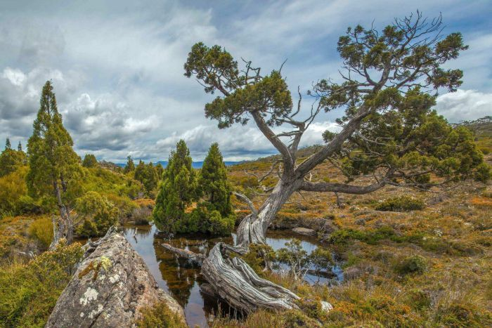 Photo: UNESCO has urged the Tasmanian Government to produce its Tourism Master Plan. (Supplied: Dan Broun)