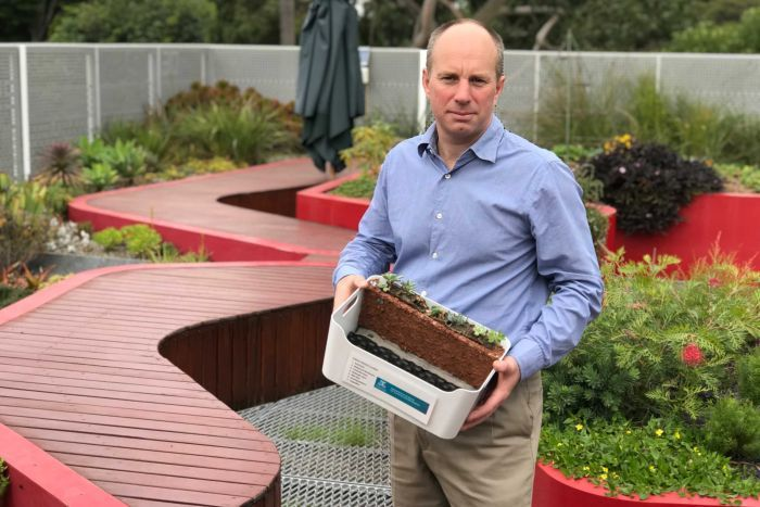 Photo: Associate Professor Nick Williams shows off the University of Melbourne's green roof which thrives in a specially designed substrate. (ABC News: James Hancock)
