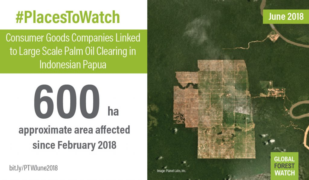 More than 600 hectares (1,500 acres) in an oil palm concession in Indonesia Papua were affected from February through April