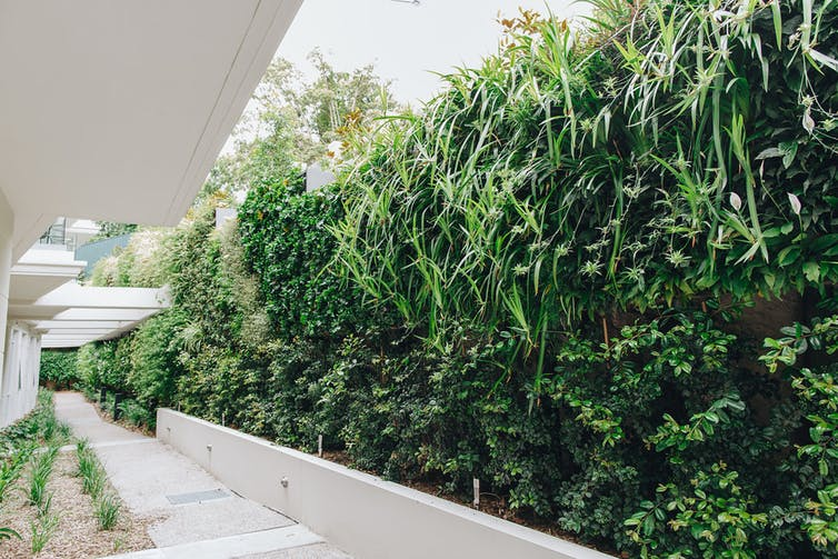 Green wall adds vegetation to an aged care home in Sydney.