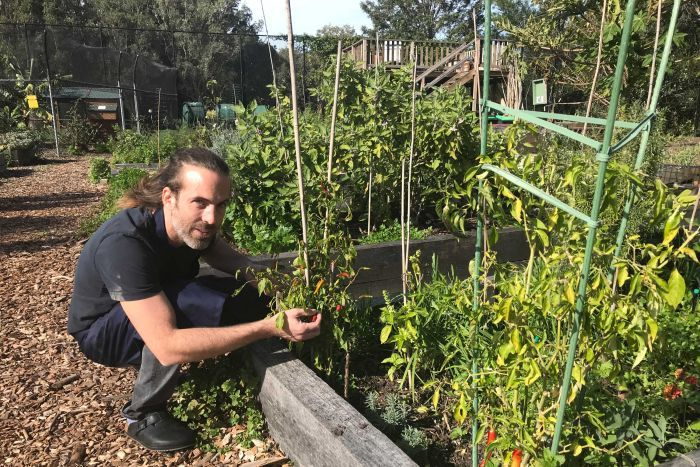 Photo: Chef Dan Lewinsky takes all green waste from the kitchen to the community garden. (ABC News: Liv Casben)