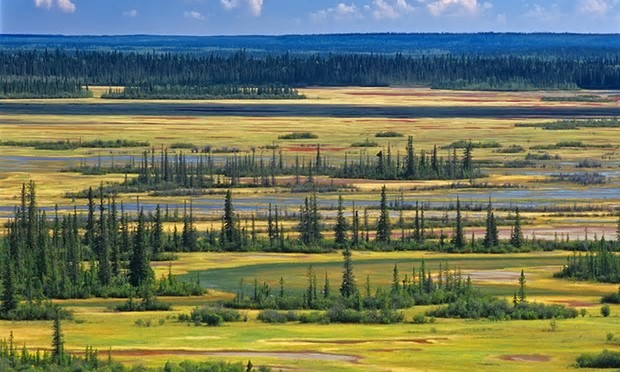 Wood Buffalo national park, the world's second-largest national park, was placed on Unesco's endangered list in 2017. Photograph: Alamy Stock Photo