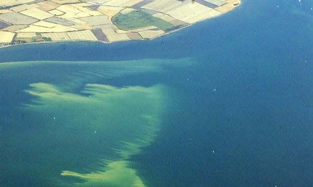 An algae slick off the German Baltic coast near the Fehmarn Sound Bridge in 2003. Photograph: Carsten Rehder/EPA