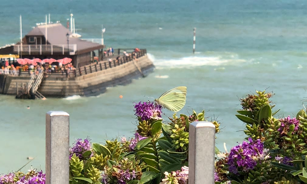 Butterfly by the sea at Broadstairs, Kent. After one of the wettest summers in the last 100 years in 2017, extreme heat in the UK this year means experts are predicting quite different results through participants' online logs. Photograph: Ailsa McGilp