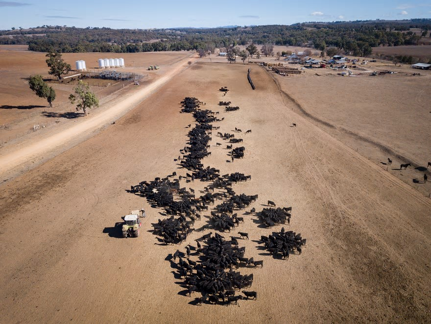 An aerial view of the cattle-feeding operation