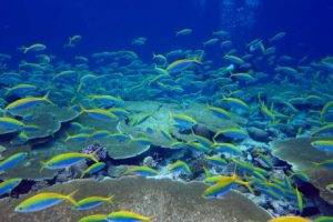 Researchers found fish biomass was much higher on reefs around rat-free islands. (Supplied: Nick Graham)