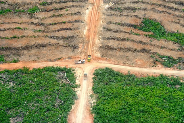 Deforestation caused by palm oil development in Santa Clara de Uchunya. Photo by Mathias Rittgerott