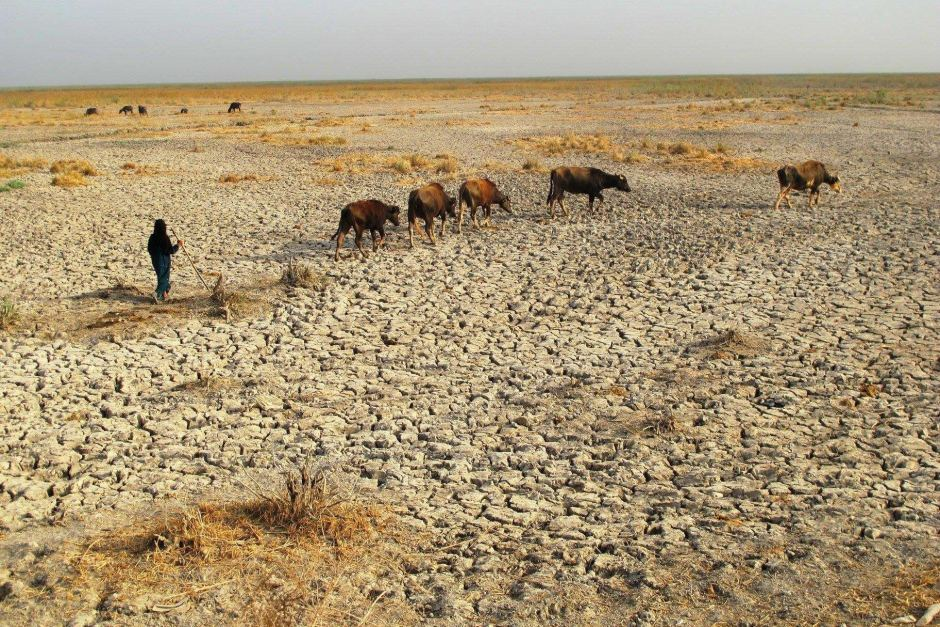 Iraq's Edenic marshlands are drying out, again