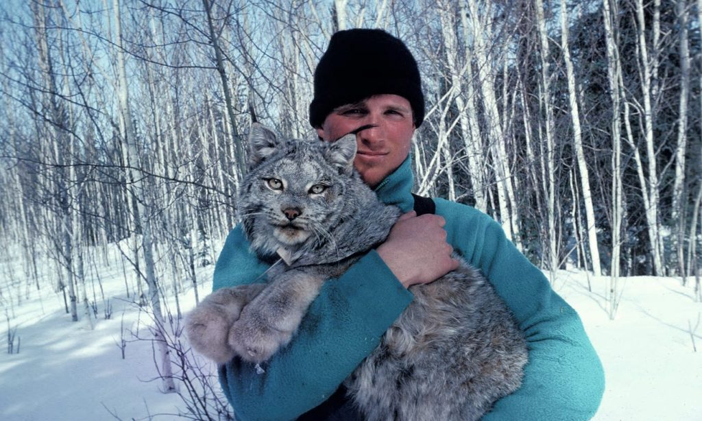 Paul Nicklen releases a wild Canadian lynx that has been fitted with a radio collar, Northwest Territories, Canada. Photograph: Mark Sabourin