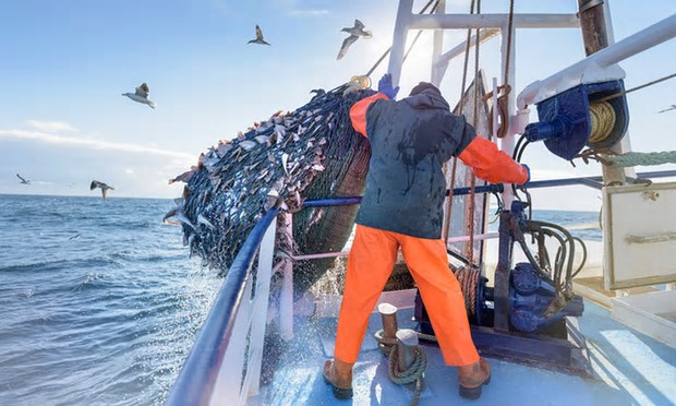 Overfishing in the unregulated high seas is a threat to many species. Photograph: Monty Rakusen/Getty