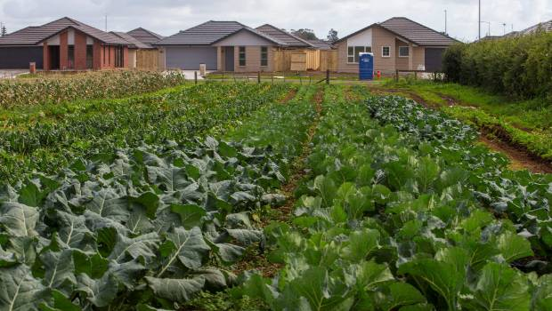 Urban sprawl is encroaching on the prime vegetable growing land of Pukekohe. Photo: Supplied