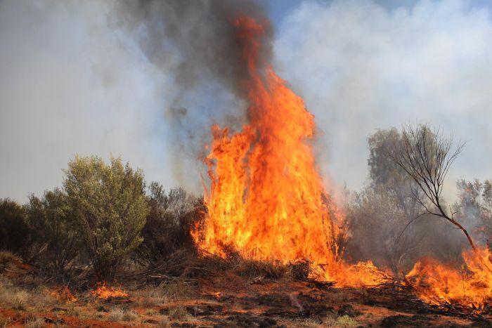 Photo: An ecologist says excessive burning is causing extinctions in the NT. (Facebook: Bushfires NT)