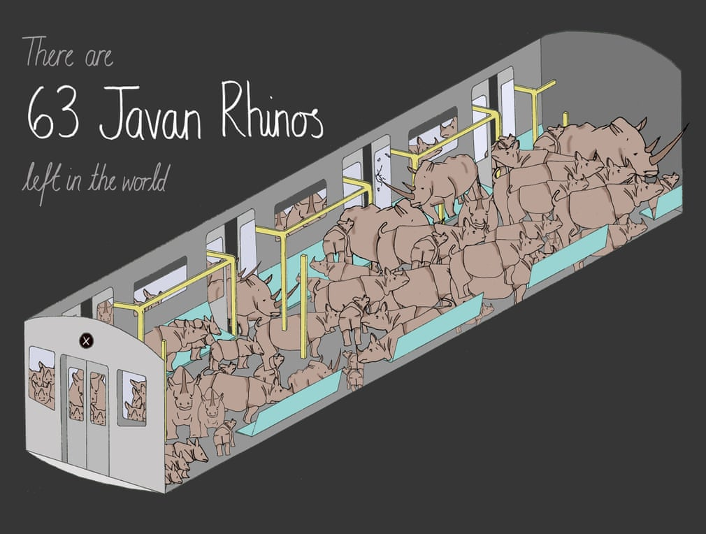 There are approximately 63 Javan Rhinos left in the world. Illustration: Mona Chalabi