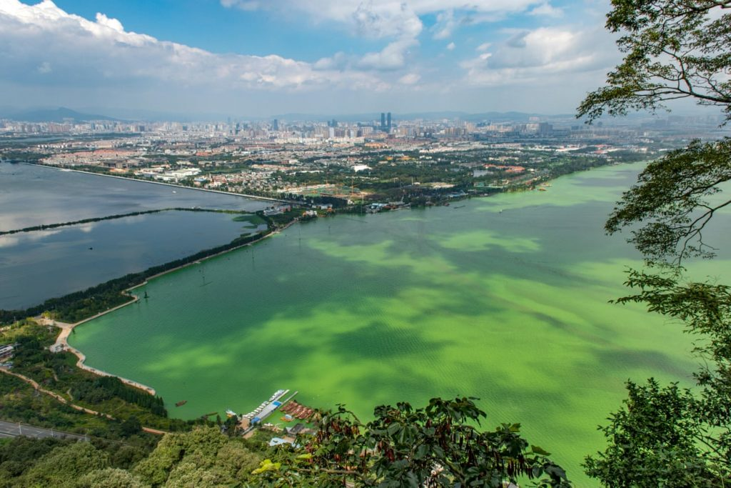 Dianchi Lake in Yunnan province turns green every year through the process of eutrophication. Photograph: Robert Wyatt/Alamy