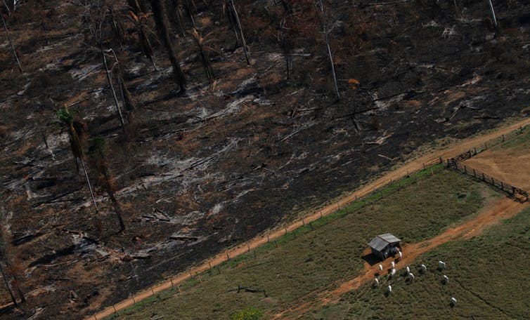 Agriculture is the main cause of deforestation in the Brazilian Amazon. Nacho Doce/Reuters