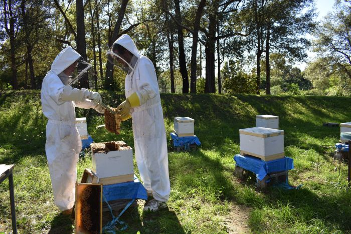 Some researchers are finding neonicotinoids can adversely affect bees at levels below detection limits. (Supplied: Théotime Colin)