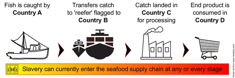 Steps in the seafood supply chain.