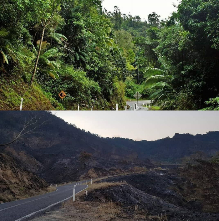 Infographic:A before and after shot of Eungella, which has been ravaged by bushfires. (Facebook: Amiee Roach)